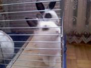 Продаются карликовые кролики.